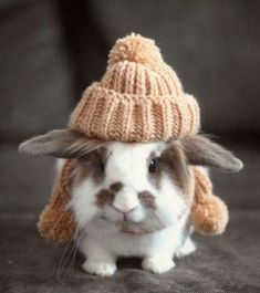 Bunny Ready for Winter