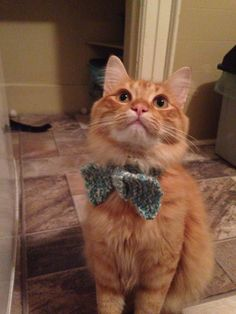 How to Knit a Bow Tie Collar for Your Cat