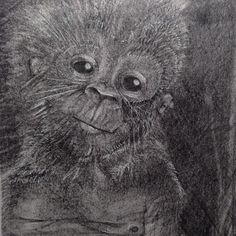 #drawings #pencil #fluidowear #monkey