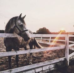 Very nice picture! I love how the horse is braught into the picture in his normal surroundings. Also the beam of sunshine makes it very pretty! #Jupinkle
