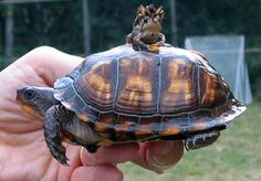 Cute Animals Photos: Cute crab toad and turtle photo