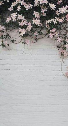 Wallpaper Free, Trendy Wallpaper, Tumblr Wallpaper, Pretty Wallpapers, Classy Wallpaper, Floral Wallpapers, Cloud Wallpaper, Baby Wallpaper, Wallpaper Ideas