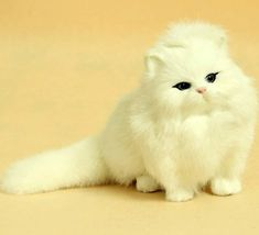 Adorable white kitten with black eyes.. Click the pic for more awww