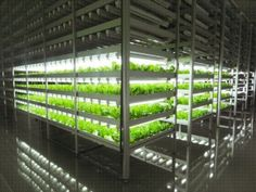 "The Mirai plant factory is a fully controlled environment using ""artificial light"" and ""air conditioning"". Hydroponically cultivating vegetables in ideal conditions."
