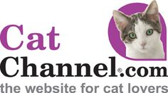 Where Can I Find More Information On Feral Cats?