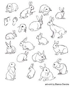 Just an art birb trying to make it in this world Bunny Sketches, Animal Sketches, Animal Drawings, Cute Drawings, Drawing Sketches, Raccoon Drawing, Rabbit Drawing, Rabbit Art, Bunny Tattoos