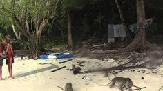 Praia dos Macacos na Ilha de Koh Phi Phi Le