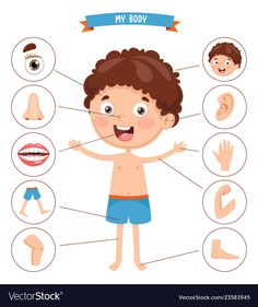 Find Vector Illustration Human Body stock images in HD and millions of other royalty-free stock photos, illustrations and vectors in the Shutterstock collection. Thousands of new, high-quality pictures added every day. Body Parts Preschool Activities, Body Preschool, Senses Activities, English Activities, Preschool Learning Activities, Preschool Worksheets, Preschool Crafts, Toddler Activities, Kids Learning