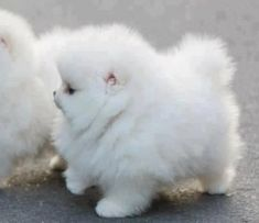 oh my gosh its like a cloud with legs! i just want to cuddle it