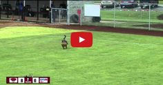 Timing Drills for Softball Hitters | Youth Sports Fans