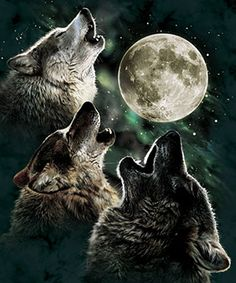 beautiful wolf and moon pictures - Google Search
