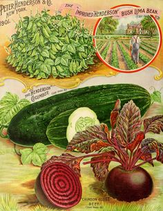 Vintage Seed Packets Peter Henderson & Co 1902 Come visit Seedy Sunday… Garden Catalogs, Seed Catalogs, Vintage Gardening, Organic Gardening, Vegetable Gardening, Vegetable Illustration, Vintage Seed Packets, Garden Labels, Seed Packaging