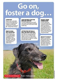 There are many reasons why fostering a dog could be right for you. We've just listed a few of them.