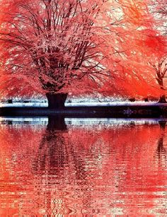 Red Tree infrared by MichiLauke on DeviantArt Infrared Photography, Nature Photography, Light Luz, Beautiful World, Beautiful Places, Back To Nature, Poetry Art, Autumn Scenes, Red Tree