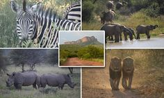 Dine near a watering holes and see animals at every turn in Marakele