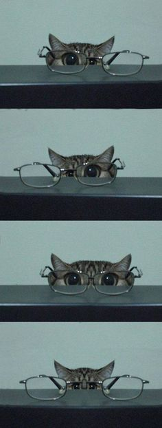 Cats with glasses