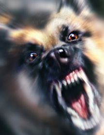 9 Kinds of Puppy Aggression and What To Do About It: Puppy Aggression and Status Related Aggression