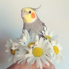 Instagram inspiration - Jack the cockatiel // www.petitloublog.com