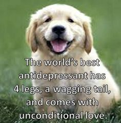 The worlds BEST antidepressant has 4 legs, wagging tail, and comes with unconditional love
