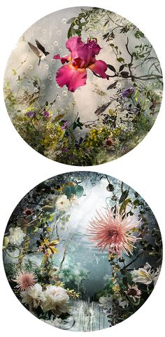 Created using hundreds of individual photographs that are merged into one, Canadian-born artist Ysbel LeMay constructs exquisite collages that are her tribute to nature.