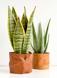 Create your own leather plant pot holders to take add style to your indoor houseplants. DIY Plant Pot Holders stitched together. Diy Hanging, Hanging Plants, Potted Plants, Shade Plants, Plastic Plant Pots, Ceramic Plant Pots, Diy Concrete Planters, Diy Planters, Crea Cuir