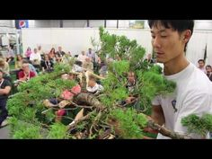 Taiga Urushibata gave a demonstration at the Generation Bonsai event, this is the second demo held on Sunday. The event was organized by Michael Tran from Mi...