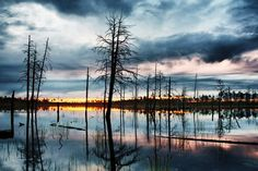 Vasyugan swamp - the largest swamp in the world - is located in Western Siberia, between the rivers Ob and Irtysh. In terms of area, It is larger than most European countries.