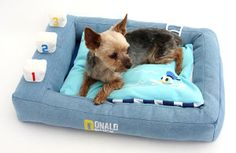 Rakuten Pets Paradise Disney Donald Duck Pool Kadora bed: Pet Paradise
