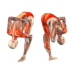 Right half-bound lotus intense stretch pose - Ardha Baddha Padmottanasana right - Yoga Poses   YOGA.com