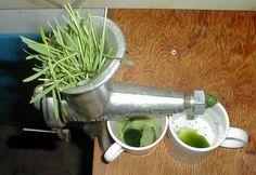 lemongrass em portugues - Pesquisa Google