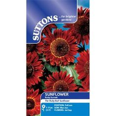 Buy Suttons Ruby Sunset Sunflower Seeds from Horkans Garden Centre, great value from Irelands Online Garden & Lifestyle Stores Edible Flowers, All Flowers, June Flower, Sutton Seeds, Red Sunflowers, Sunflower Seeds, Planting Seeds, Unique Colors, Bloom