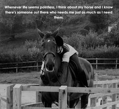 Except my horse is a butt hole . Funny Horses, Cute Horses, Pretty Horses, Beautiful Horses, Horse Girl, My Horse, Horse Love, Equine Quotes, Equestrian Quotes