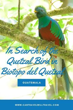 Stop at Biotopo del Quetzal to break up the journey from Antigua to Semuc Champey in Guatemala. Search for the quetzal bird whilst you hike in the protected cloudforest. South America Destinations, South America Travel, North America, Travel Destinations, Latin America, Travel Couple, Family Travel, Animal Experiences, Travel Guides