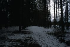Dark Forest, Winter, Outdoor, Winter Time, Outdoors, Outdoor Games, The Great Outdoors, Winter Fashion