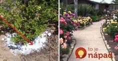 Small Gardens, Stepping Stones, Sidewalk, Outdoor Decor, Plants, Vintage, Little Gardens, Walkways, Plant