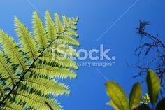 New Zealand Punga Fern & Sky Royalty Free Stock Photo Twitter Header Photos, Twitter Headers, Maori Words, Kiwiana, Sky Photos, Abstract Photos, Lush Green, Native Plants, Image Now
