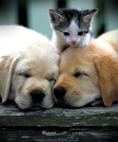 Cat Almighty – Google+
