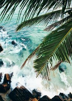 Free your Wild :: Escape to a Beach Paradise :: Tropical Island Adventures :: Soak in the Sun :: Palms + Ocean Air :: See more Untamed Island inspiration / Summer Inspiration No Wave, Beach Aesthetic, Summer Aesthetic, Tropical Vibes, New Wall, Belle Photo, Summer Vibes, Summer Beach, Men Summer