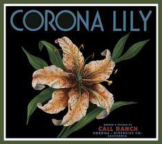 Corona Easter Lily Flower Orange Citrus Fruit Crate Label Art Print
