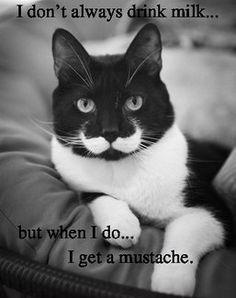 moustache-cat milk
