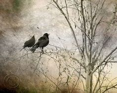 Blackbird Print, Pair of Blackbirds, Surreal, 2 Blackbirds, Two Black Birds, Black, Mysterious Blackbird Print, Fine Art Photography, Decor