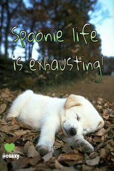 Fatigue is awful! So exhausted.  #spoonie #myositis