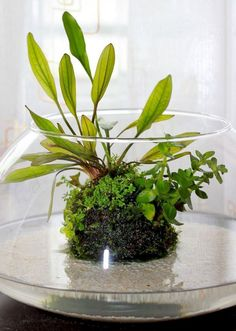 25 Incredible Indoor Water Garden Design And Decor Ideas For Small Home Inspiration - konto - HOME Water Plants Indoor, Indoor Pond, Container Water Gardens, Container Gardening, Agriculture, Farming, Garden Plants, House Plants, Vegetable Garden