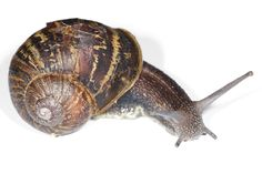 Sarah and I were driving back from Angouleme today when we came across a snail hunter in the vines. Snail hunting is a fairly sedentary s. Snails In Garden, Garden Bugs, Garden Insects, Garden Snail, Cat Food, More Pictures, Creatures, Animals, Wikimedia Commons