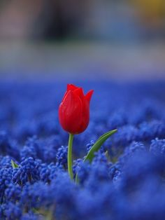 Don't be afraid to stand alone and shine in your extreme beauty God has created in YOU!