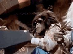 animated gif: monkey band