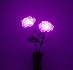Tumblr roses