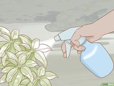 How to Get Rid of Powdery Mildew on Plants. Powdery mildew is a fungus that looks like flour dusted on plants, often in circular spots. It most commonly appears on leaves, but can also attack stems, flowers, and fruit. Patio Plants, Outdoor Plants, Outdoor Decor, Household Plants, Household Cleaners, Squash Plant, Get Rid Of Mold, Mildew Remover, Powdery Mildew
