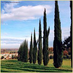 Prospettive naturali... La #PicOfTheDay #TurismoER di oggi gode del sole invernale sulle #colline di #Santarcangelo di #Romagna =) Congratulazioni e grazie a @francescomagnani / Natural #perspectives... Today's PicOfTheDay TurismoER enjoys the #winter #sun over the #hills of Santarcangelo in Romagna =) Congrats and thanks to @francescomagnani
