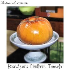 "This beast was 8"" in diameter! #brandywine #heirloom #tomato photo by Botanical Interests employee, Erica."